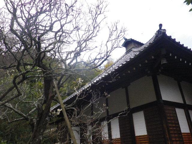 09-1) 15.02.21 早春の鎌倉「光則寺」