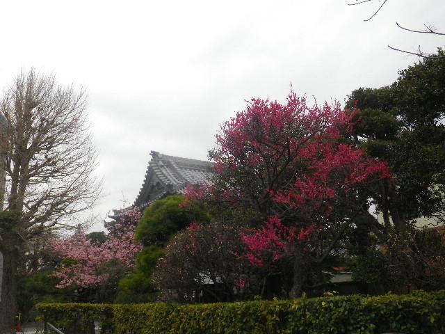 01-1)  東身延 日蓮宗「妙厳山 本覚寺」_ 鎌倉市小町