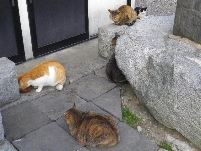 10) メンバーの一同、食事の順番待ち。一切喧嘩など無く、皆 仲良し。