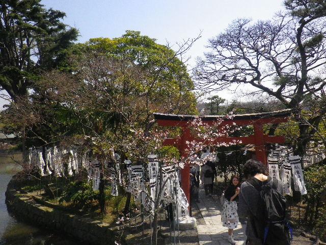 03)  15.03.30 鎌倉「鶴岡八幡宮」の桜
