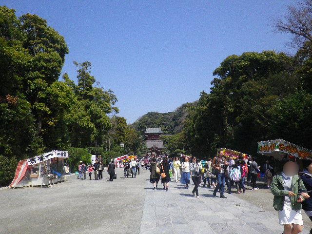 04)  15.03.30 鎌倉「鶴岡八幡宮」の桜