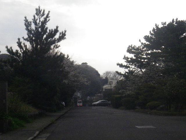 02-1) 15.04.01 逗子「披露山庭園住宅」邸宅の桜