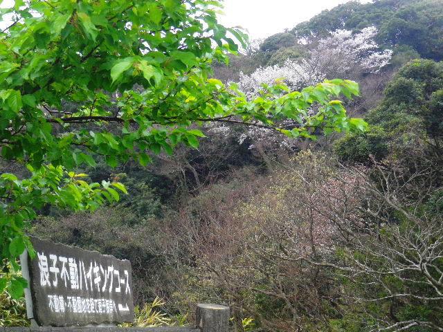 01-1) 15.04.01 「逗子市立 披露山公園」の桜