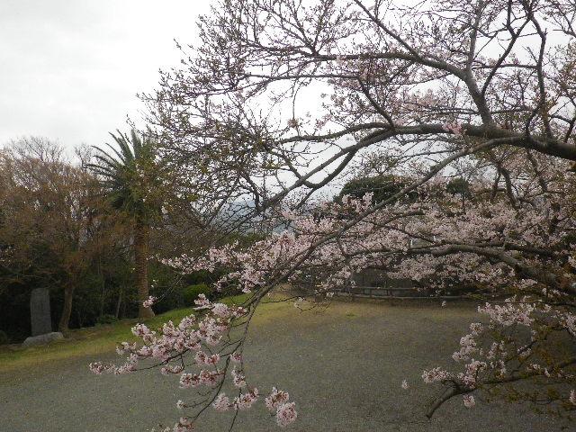 08) 15.04.01 「逗子市立 披露山公園」の桜