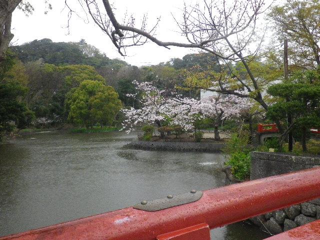 02) 15.04.04雨 鎌倉「鶴岡八幡宮」雨の観桜