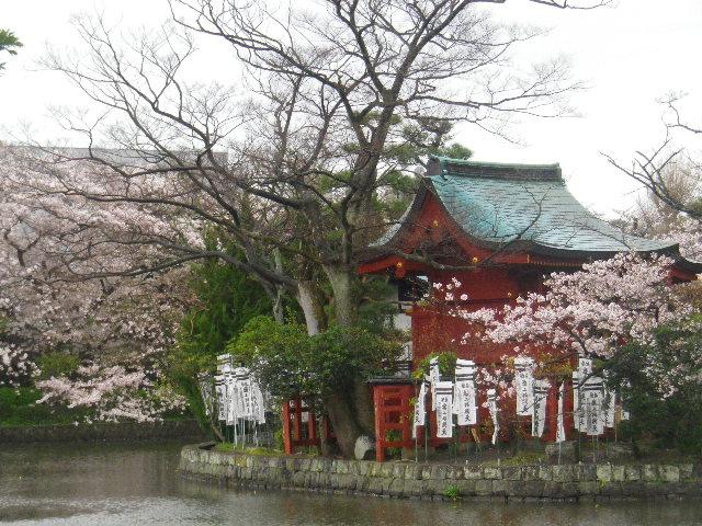 09) 15.04.04雨 鎌倉「鶴岡八幡宮」雨の観桜