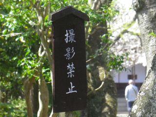06)15.04.06 鎌倉「極楽寺」桜が散り始める頃