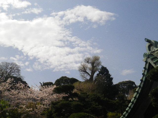 03-2)  15.04.06 桜咲く頃、鎌倉「長谷寺」を外部から眺めた。
