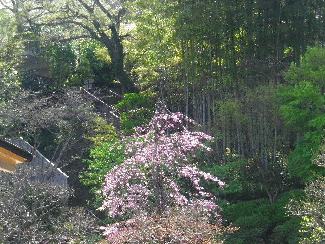 06)  15.04.06 桜咲く頃、鎌倉「長谷寺」を外部から眺めた。