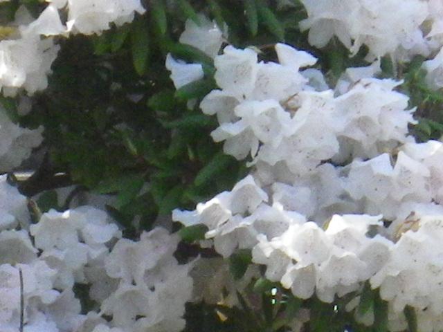 09-2)  15.04.06 桜咲く頃、鎌倉「長谷寺」を外部から眺めた。