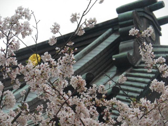 12-1-b) 光明寺の桜