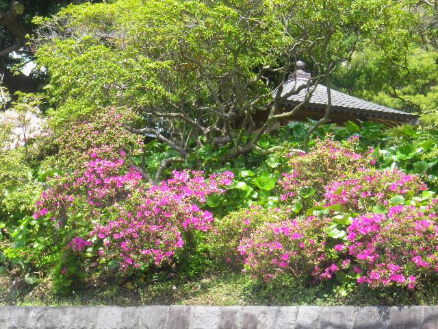 02) 浄土宗「祇園山 安養院田代寺」 _ 鎌倉市大町