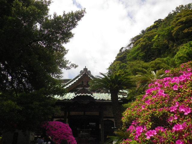 02-1) 15.05.05 ツツジがピークの、鎌倉「安養院」。