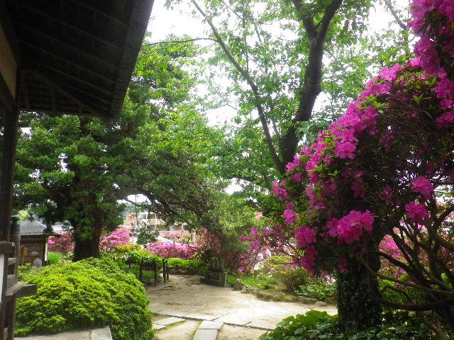 04-3) 15.05.05 ツツジがピークの、鎌倉「安養院」。