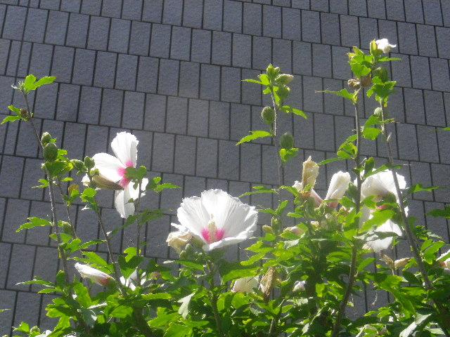 02-4) _ 15.08.09 鎌倉「大巧寺」初秋と呼ぶには早過ぎの感あり、立秋の翌日。