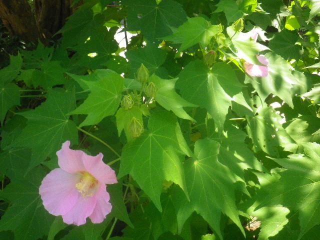 03) _ 15.08.09 鎌倉「大巧寺」初秋と呼ぶには早過ぎの感あり、立秋の翌日。