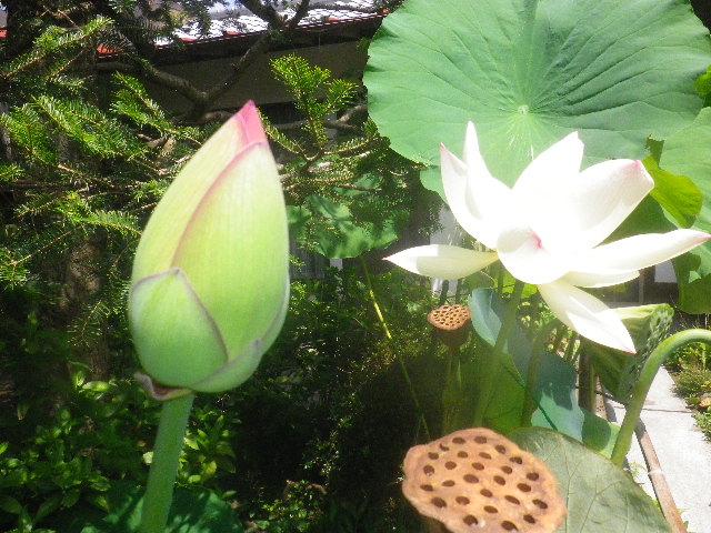 06-3) _ 15.08.09 鎌倉「大巧寺」初秋と呼ぶには早過ぎの感あり、立秋の翌日。