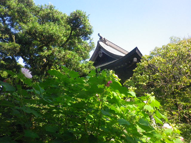 19)  15.09.19 鎌倉「宝戒寺」萩をかき分けて境内を歩く季節