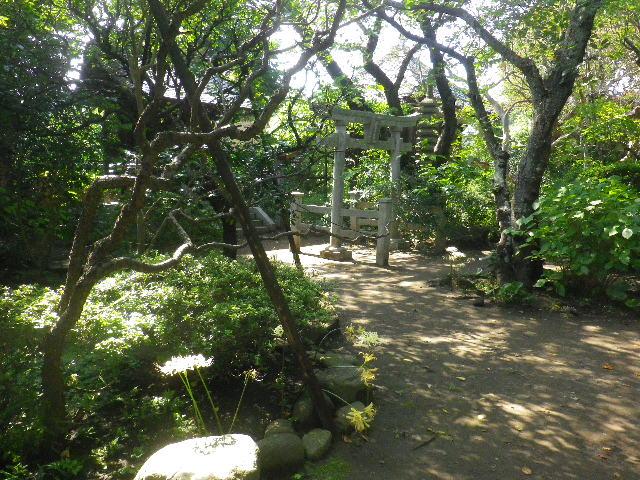 24)  15.09.19 鎌倉「宝戒寺」萩をかき分けて境内を歩く季節