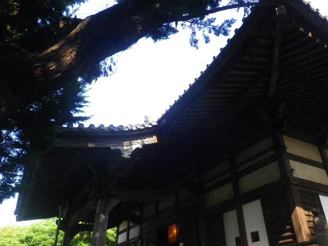 33)  15.09.19 鎌倉「宝戒寺」萩をかき分けて境内を歩く季節