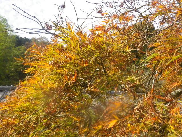 05-2)  15.11.17 初冬の鎌倉「光則寺」
