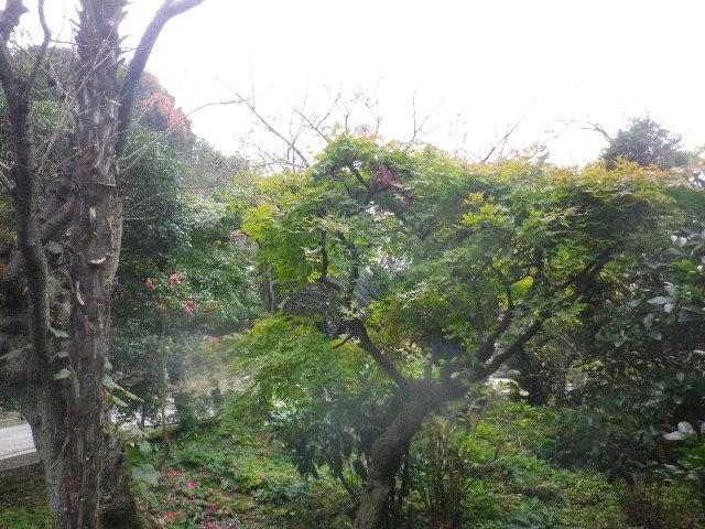 07) 紅葉が待ち遠しい、背丈を低く刈り込まれた庭木。