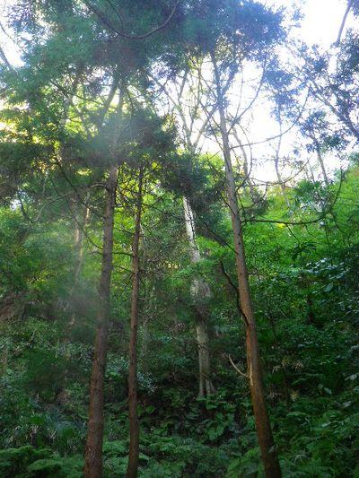 """05-4) """" 祇園山ハイキングコース """""""