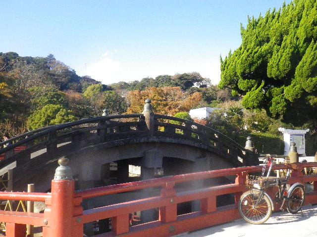 08a) 神苑ぼたん庭園入り口前から、' 太鼓橋 ' 方向 _ 15.11.30 鎌倉「鶴岡八幡宮」葉が色づき始める頃