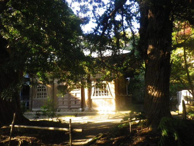 06)  15.11.30 鎌倉「浄光明寺」葉が色づく頃