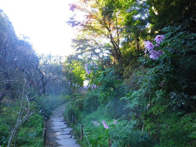 01-1) _ 15.12.05 鎌倉「瑞泉寺」紅葉は、微妙に もう少し先。