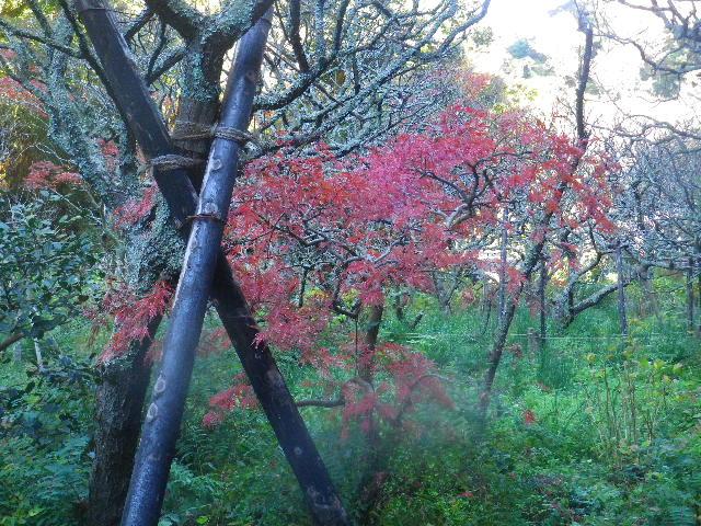 03) _ 15.12.05 鎌倉「瑞泉寺」紅葉は、微妙に もう少し先。