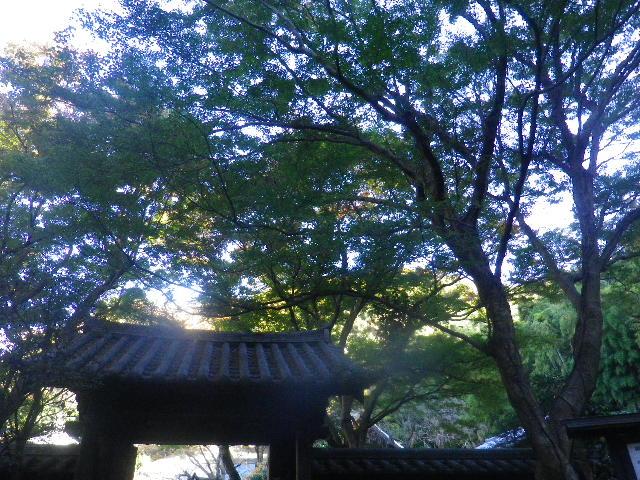 20) 山門周辺も、まだ緑。 _ 15.12.05 鎌倉「瑞泉寺」紅葉は、微妙に もう少し先。