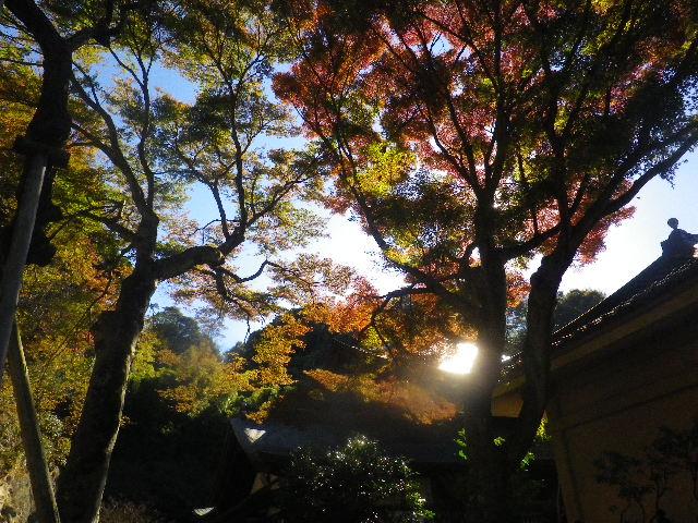 40-1) _ 15.12.05 鎌倉「瑞泉寺」紅葉は、微妙に もう少し先。