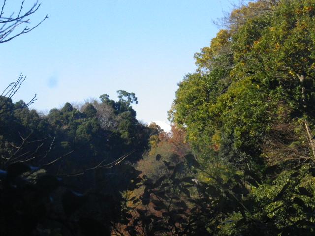 42-1) 今日は富士山が見えた _ 藤棚ベンチ周辺から _ 15.12.05 鎌倉「瑞泉寺」紅葉は、微妙に もう少し先。
