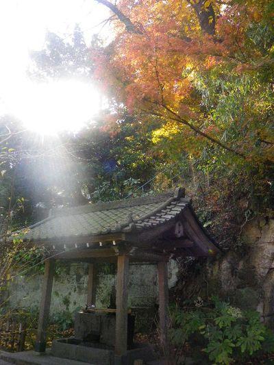 11-1)   15.12.12 鎌倉「安国論寺」連日の強風を豪雨にも耐えた紅葉と黄葉
