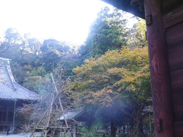 05)  15.12.12 鎌倉「妙本寺」紅葉の最盛期
