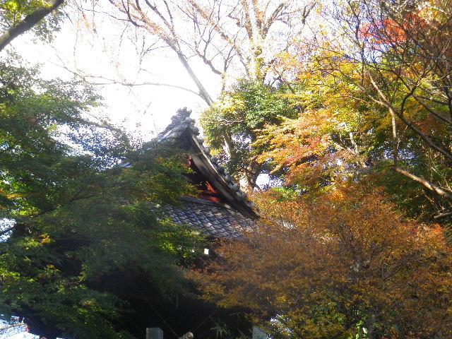 06-2)  15.12.12 鎌倉「妙本寺」紅葉の最盛期