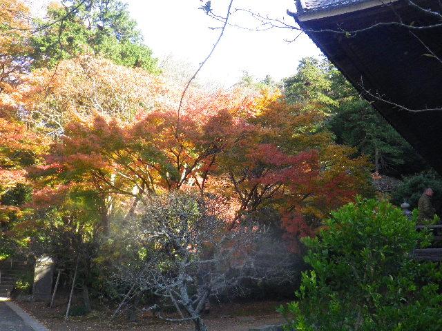 07)  15.12.12 鎌倉「妙本寺」紅葉の最盛期