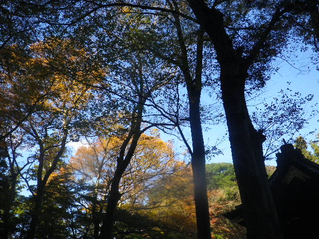 17)  15.12.12 鎌倉「妙本寺」紅葉の最盛期