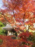 03b-2)  15.12.15 鎌倉「浄光明寺」同じ境内でも時間差後発の紅葉散り際を見とどけた