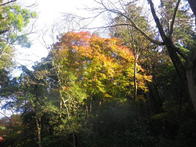 02) 駅周辺に在りながら鬱蒼とした高木に囲まれた参道では、まだ緑色の葉が多い。
