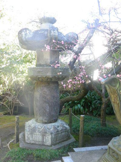05-3) 本堂左前の灯籠と梅。(写真の左方向には天然記念物 樹齢350年の山茶花が在る)