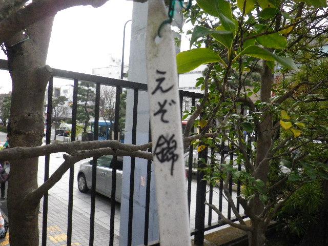 01-2) えぞ錦 16.03.12 鎌倉「大巧寺」種類豊富な椿が咲き揃い始める頃