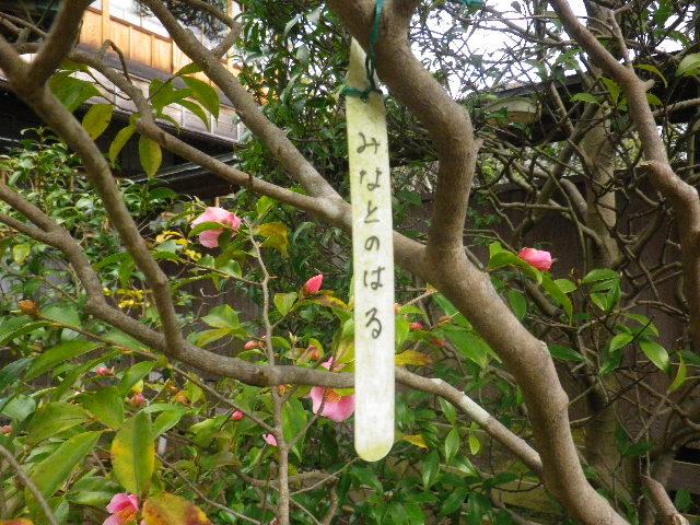03-1) みなとのはる  _ 16.03.12 鎌倉「大巧寺」種類豊富な椿が咲き揃い始める頃
