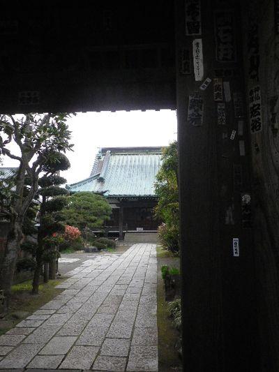 01) 16.03.30 鎌倉「九品寺」木瓜の花