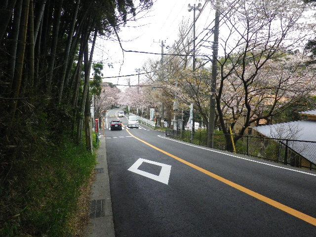 01) バス路線では最高所?の約20m後方「若松_バス停」へ向かう際に、振り返って撮った。 _ 16.04.02 鎌倉山の桜