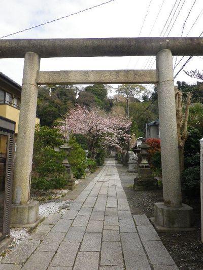 01) 16.04.02 鎌倉「五所神社」の桜