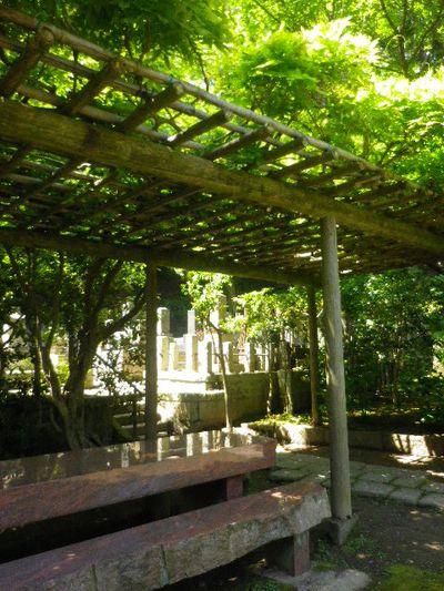 09-1)  _ 16.04.30 晩春の・・・というよりも、立夏直前というべき緑が濃い  鎌倉「安国論寺」。