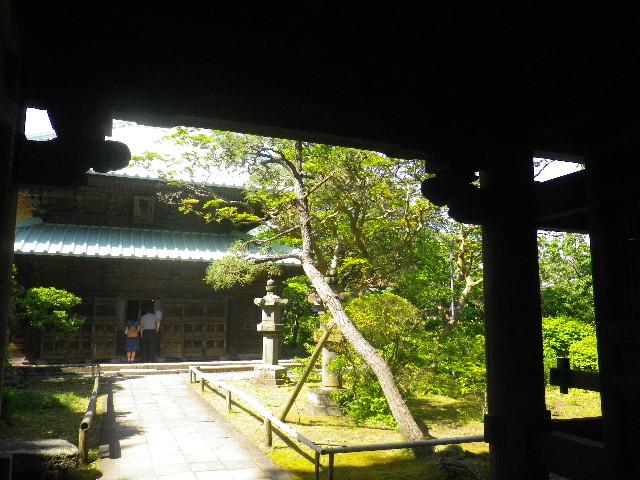 06-3)  _ 16.05.05 白藤に蜜蜂が集う時期の、鎌倉「英勝寺」。