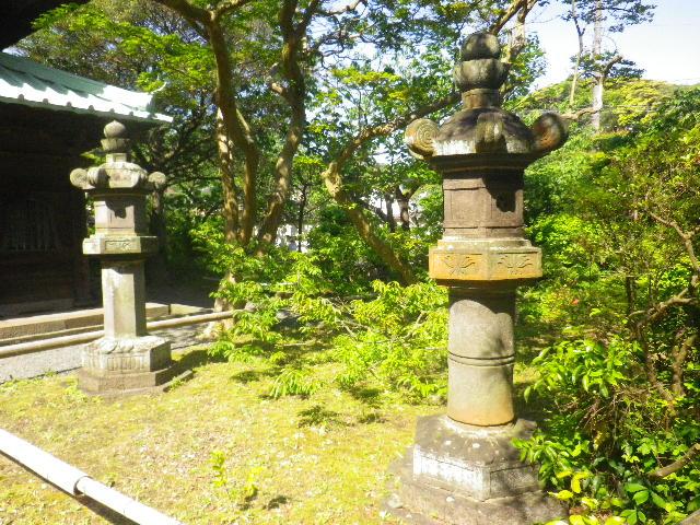 06-4)  _ 16.05.05 白藤に蜜蜂が集う時期の、鎌倉「英勝寺」。